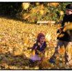 Spiele im Herbst