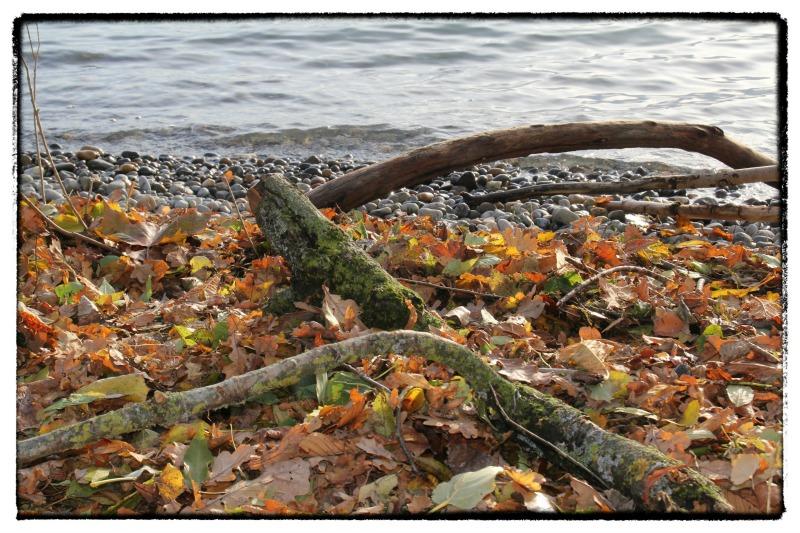 Familien-Herbst: Schwemmholz sammeln