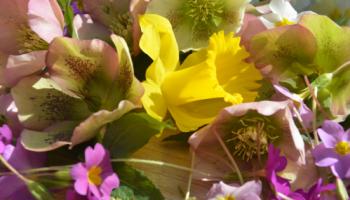 It's spring_Foto I.Gößwein