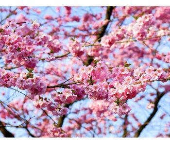 Frühlingstraditionen Foto Pixabay