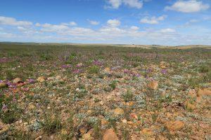 Karoo Südafrika