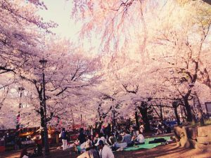 Frühlingstradition in Japan